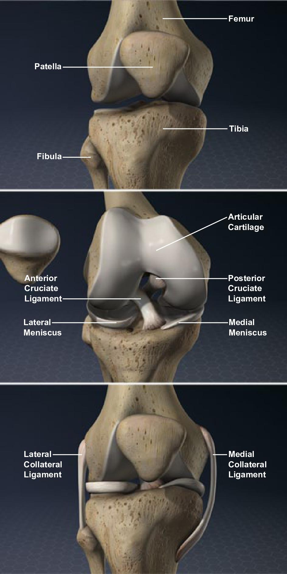 Orthopaedic Sports Specialists