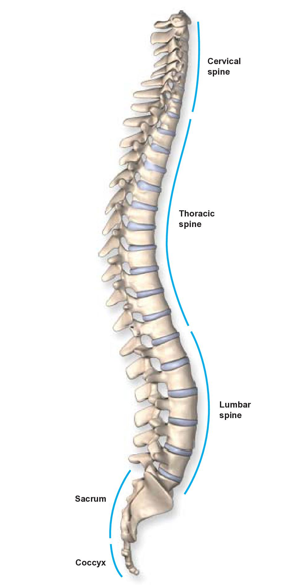 Summit Healthcare Pain Clinic | Anatomy of the Spine